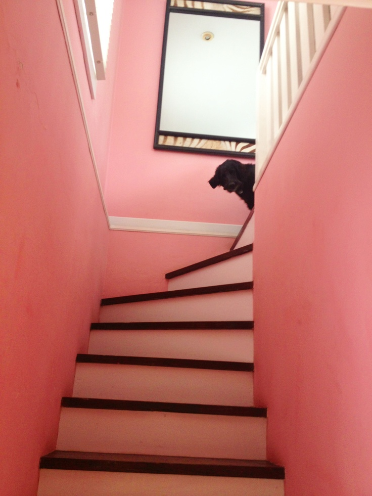 Pink Monochrome Stair